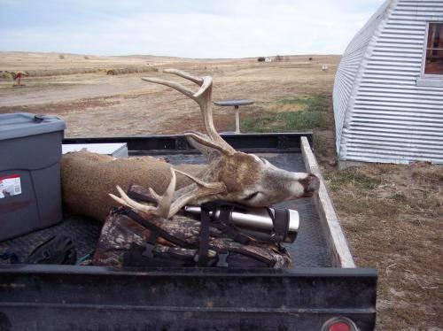 Deer 11 44