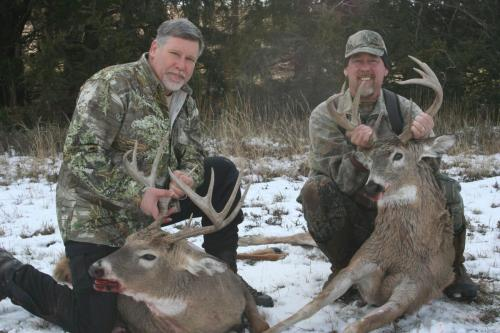 deer50